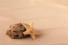 Mollusque et étoiles de mer sur le sable de plage photographie stock libre de droits