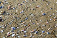 Mollusques et crustacés à la plage de mer Photographie stock libre de droits