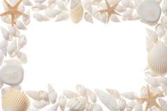 Mollusques et crustacés Image libre de droits