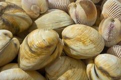 Mollusques et crustacés photographie stock