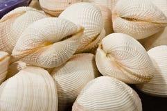 Mollusques et crustacés photos stock