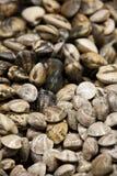 Mollusques et crustacés Photographie stock libre de droits