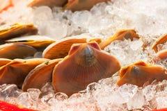 Mollusques et crustacés Image stock