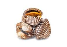 Mollusques et crustacés de Cardiidae d'isolement sur le fond blanc Photos libres de droits