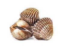 Mollusques et crustacés de Cardiidae d'isolement sur le fond blanc Photos stock