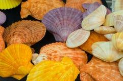 Mollusques et crustacés de couleur photo stock