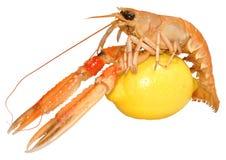 Mollusques et crustacés de Langoustine Image stock