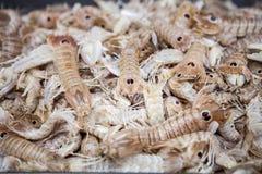 Mollusques et crustacés, mante de squilla à la poissonnerie Photographie stock libre de droits