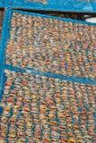 Mollusques et crustacés secs au soleil Images stock