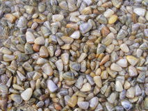 Mollusques et crustacés sur la plage Photos stock