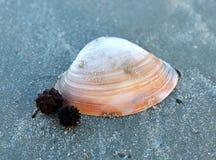 Mollusques et crustacés sur la plage Images libres de droits
