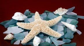 Mollusques et crustacés sur les roches bleues Photographie stock