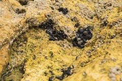 Mollusques incorporés dans la roche Photographie stock