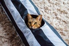 Molly η γάτα Στοκ φωτογραφίες με δικαίωμα ελεύθερης χρήσης