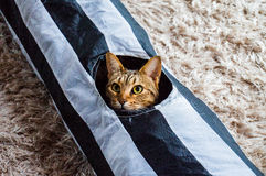 Molly The Cat. In her tube Royalty Free Stock Photos