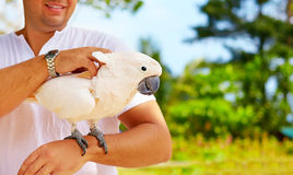 This is Molly. She likes massage. Cockatoo parrot Stock Photography
