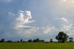 Moln över aftonhimlen ovanför risfälten arkivfoton