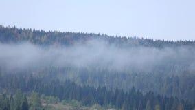 Moln över blast av vintergröna högväxta granträd, tidschackningsperiod stock video