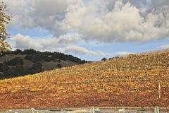 Moln över de färgrika vingårdarna royaltyfria foton