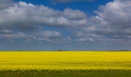 Moln över vetefältet Saskatchewan Arkivbilder