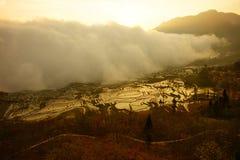 Moln av mist som skriver in och täcker en risfält på solnedgången i Kina Royaltyfria Foton