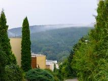 Moln av mist som stiger upp från skogen Royaltyfria Bilder