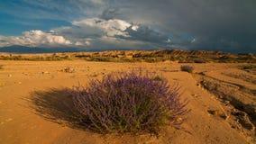 Moln i öknen med blommor timelapse Arizona arkivfilmer