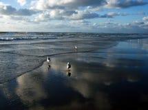 Moln och fåglar på stranden Arkivfoto