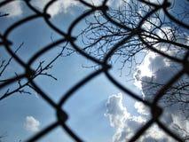 Moln och filialer för blå himmel för raster arkivbild