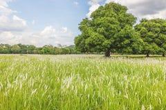 Moln och landskap med det gröna trädet Royaltyfri Bild