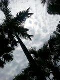 Moln och palmträd Royaltyfria Foton