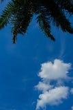 Moln och palmträd Royaltyfria Bilder