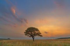 Moln och solnedgång i harmoni med trädet Arkivbild