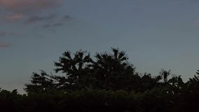 Moln och träd stock video