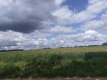 Moln ovanför sojabönafält Fotografering för Bildbyråer