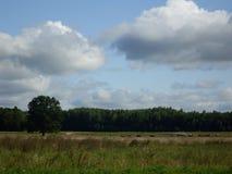 Moln på blå himmel över fältet Arkivbild