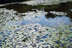 Moln som reflekterar av vatten i dammet för liljablock Arkivbild