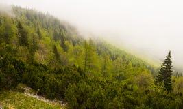 Moln som täcker branta dimmiga bergträn Royaltyfri Foto