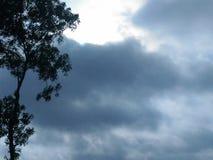 Moln trädet, himmel för lågt ljus arkivfoto