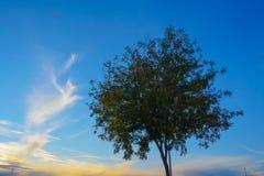 Molnen och trädet arkivbilder