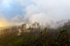Molnet klamra sig fast intill berget, ön av madeiran Royaltyfri Bild