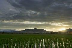 Molnig dag och ricefield Arkivbilder