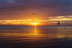Molnig havssolnedgång för stillsam plats med seagulls som flyger på solnedgången Fotografering för Bildbyråer