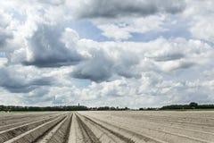 Molnig himmel över ett fält av potatisar Arkivfoto
