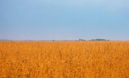 Molnig himmel över guld- fält Royaltyfri Foto