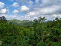 Molnig himmel i en skog royaltyfri bild