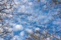 Molnig himmel med filialer av träd royaltyfri bild