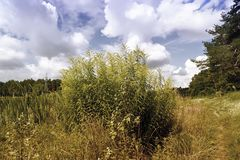 Molnig himmel med gräs och skogkanten Royaltyfri Bild