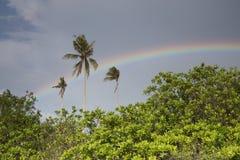 Molnig himmel och regnbåge över de tropiska buskarna och palmträden Arkivbild