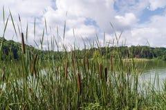 Molnig himmel ovanför floden Fotografering för Bildbyråer